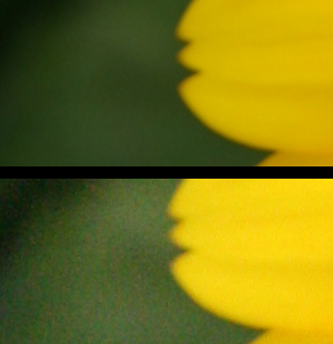 A crop of two photos, one taken at ISO 100 (top) and another at ISO 1600.